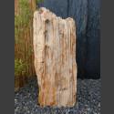 versteinertes Holz  88cm