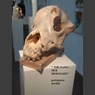 """"""" der Reißzahn"""" – Hundeschädel Skulptur Steff Bauer"""