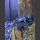 Bronze Figur Gecko auf Basaltsäule