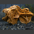 Sahara Sandrose Wüstenrose 35kg
