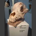 """""""Le Fang"""" - crâne de chien Sculpture Steff Bauer"""