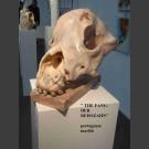 """""""De Fang"""" - Hond schedel sculptuur Steff Bauer"""
