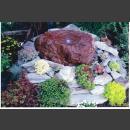 Lava Quellstein bepflanzt